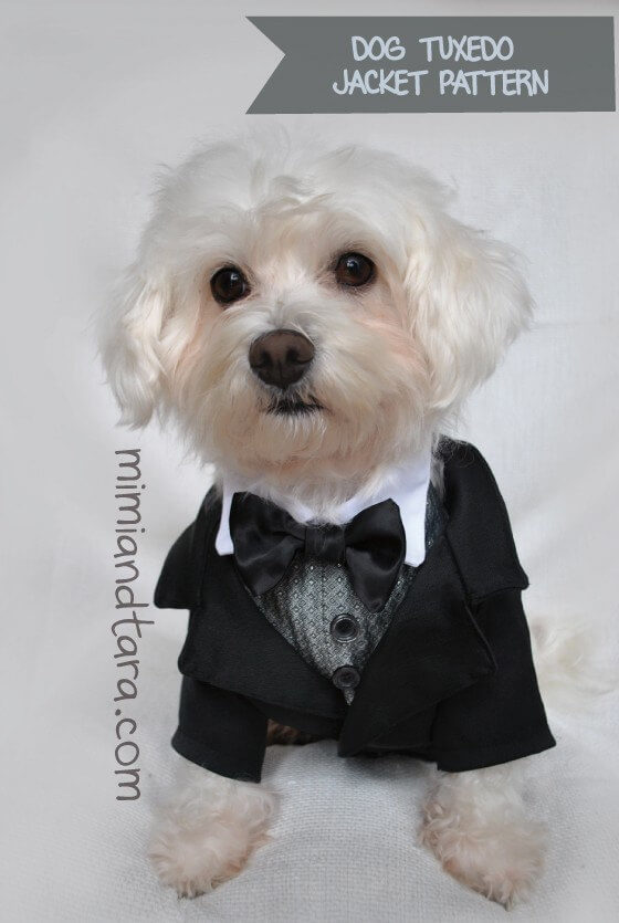 Tuxedo jacket pattern for your dog