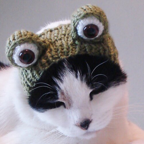 Knit frog hat for your cat by xmoonbloom