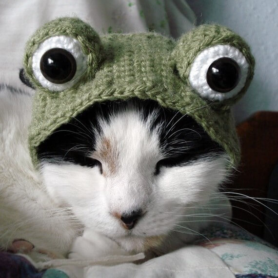 Frog costume pattern for your cat by xmoonbloom